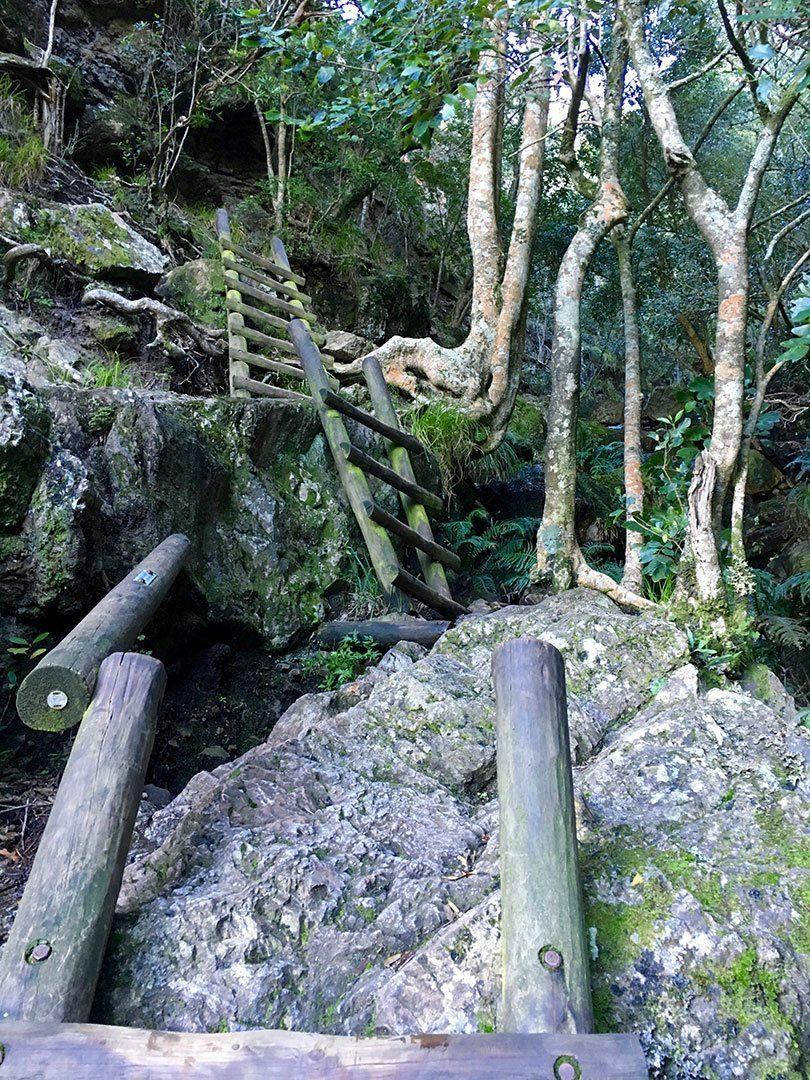 Skeleton Gorge Table Mountain hike