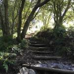 Skeleton Gorge hiking route Kirstenbosch Gardens
