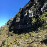 Hike up Skeleton Gorge from Kistenbosch Gardens