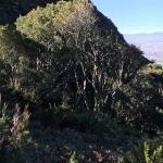 Hike up Skeleton Gorge