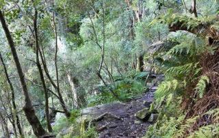 Skeleton Gorge hiking route