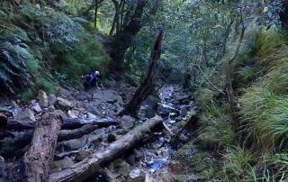 Table Mountain Skeleton Gorge