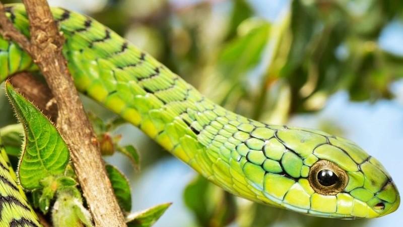Snakes on Table Mountain