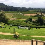 Costantia wine tour
