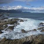 Hermanus coastline whale tours