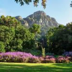 Kirstenbosch Botanical Gardens tour