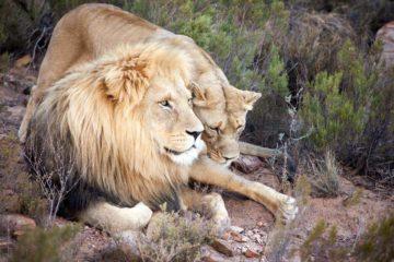 Cape Town Safari tour