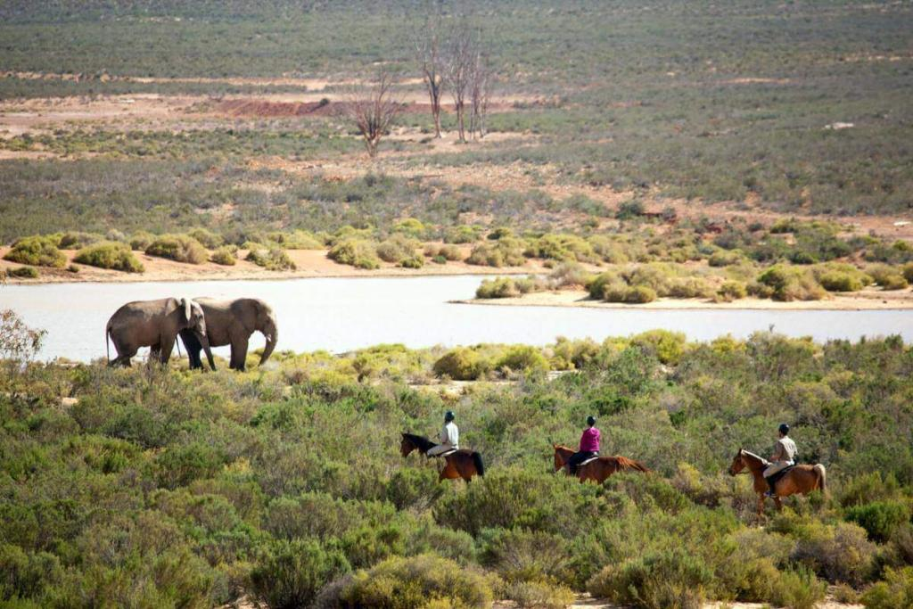 Cape Town safari on horseback