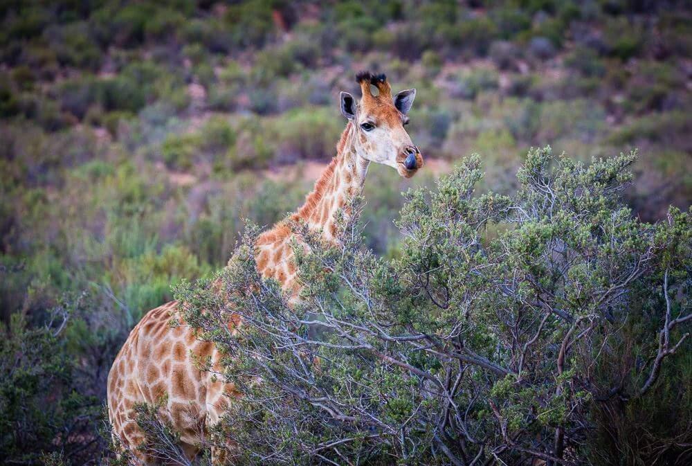 Safari park Cape Town Hike Addicts