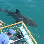 Shark tours South Africa