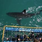Shark tours in Cape Town