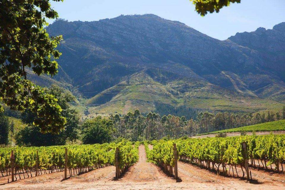 Stellenbosch winelands copy