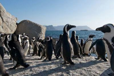 Thumbnail-Full-day-Cape-Peninsula