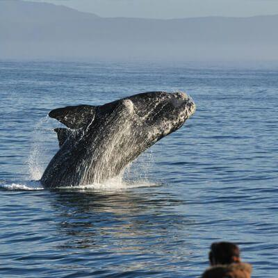 Full day Whale Watching tour