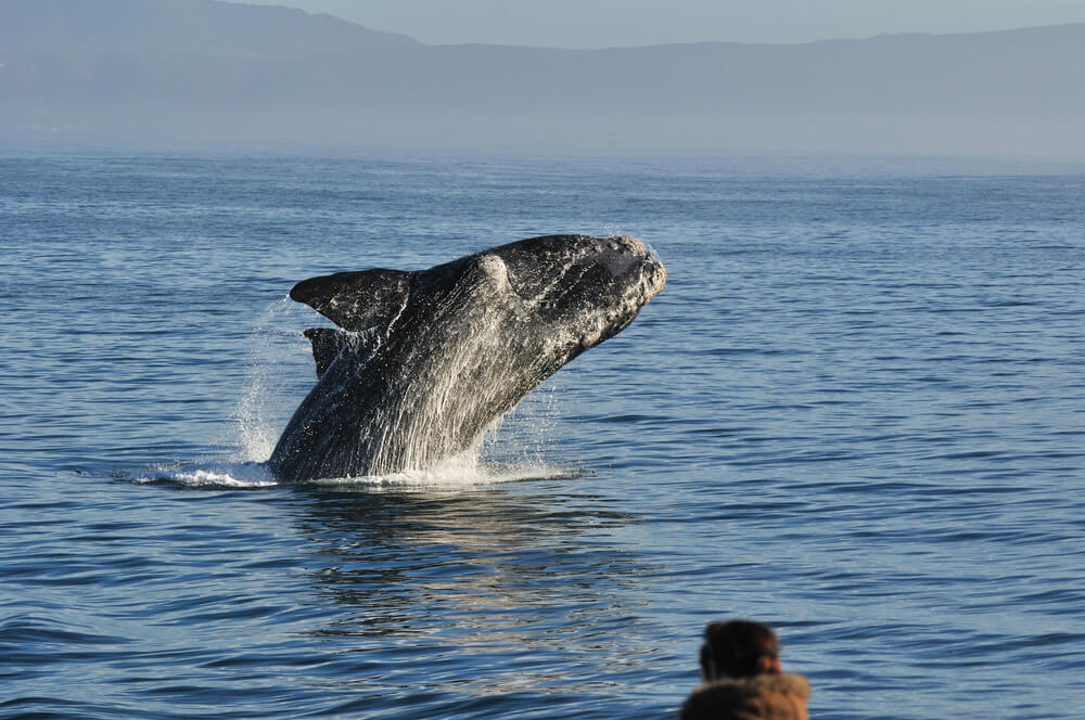 Table Mountain Hike and whale watching tour