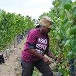 Wine tours vinyards cape town