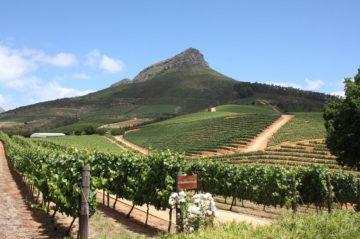 vinyards wine tours Cape