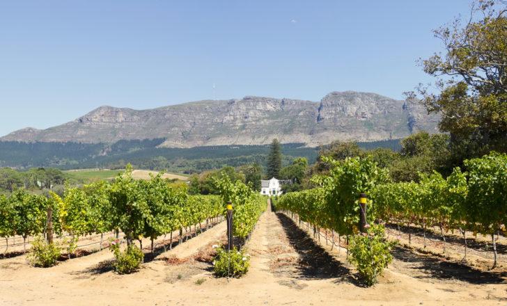 Constantia wine route