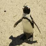 Penguin tours Cape Town