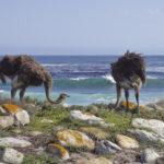 Ostrich Cape Point
