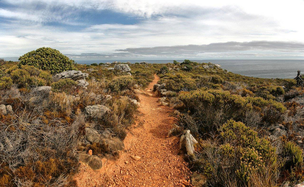 Hiking path in Cape Town South Africa