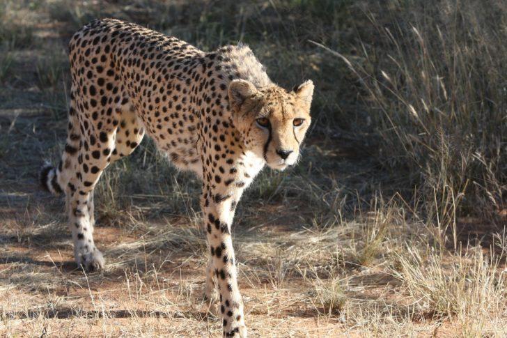 Safari tour in Cape Town South Africa