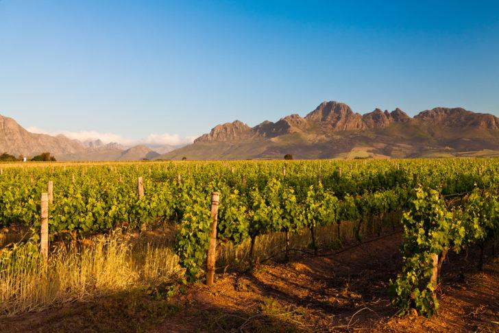 Stellenboch wine Cape Town