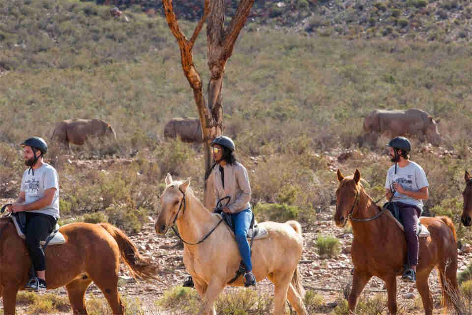 Cape Town horseback safari on a game reserve