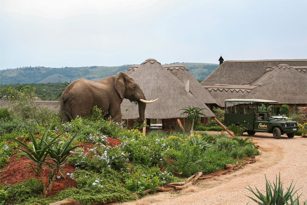 Safari from Cape Town