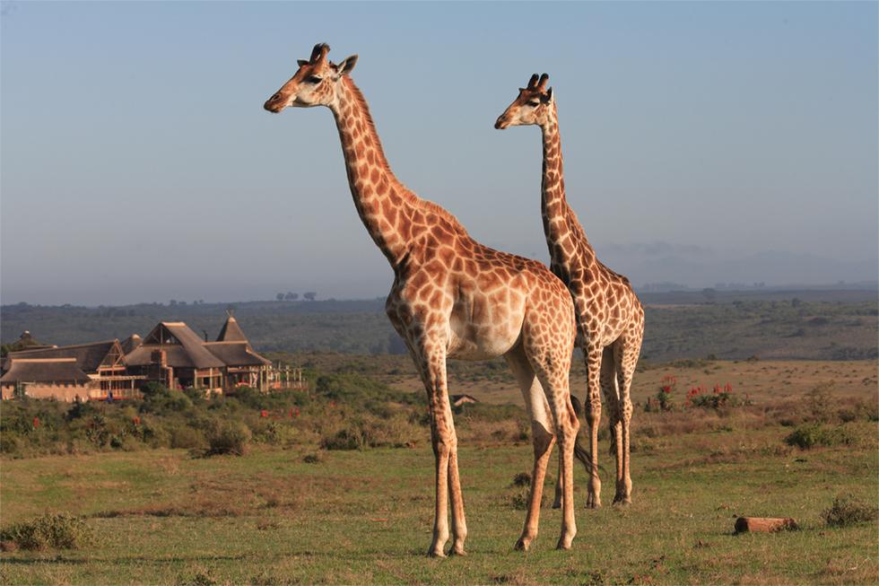 Cape Town Safari to the Garden Route