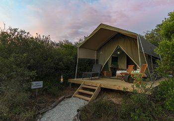 Explorer camp tents 2
