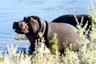 Safaris Inverdoorn