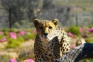 Inverdoorn safari Game Reserve