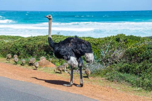 Cape point Cape Town tour