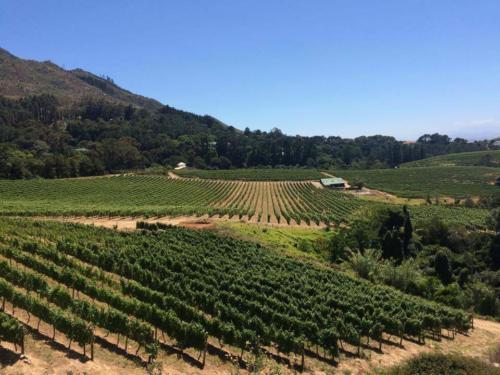 Constantia wine valley Cape Town