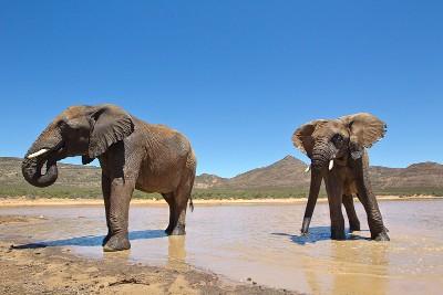Day safari tour Cape Town
