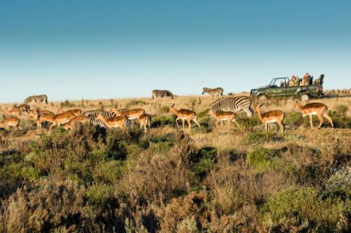 Gondwana Safari