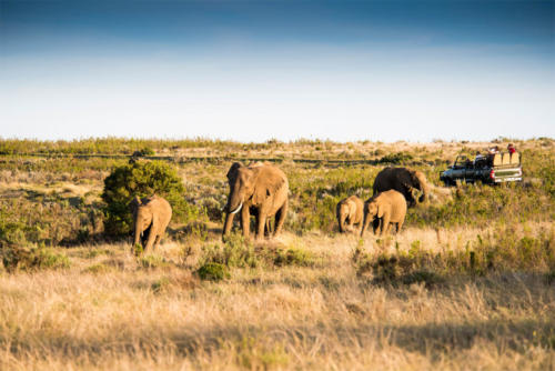 Safari at Gondwana Game Reserve
