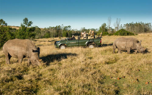 Game-Drive-Rhino-2