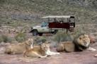 Cape Town Safari in 4x4