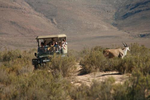 Safari drive Cape Town