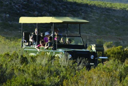 Safari Game drive close to Cape Town