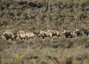 Aquila Game Reserve Western Cape