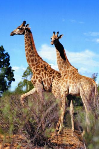 Safari park Cape Town