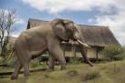 Wildlife at Gorah
