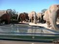 Elephants at Gorah