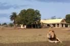Wildlife at Gorah Elephant Camp