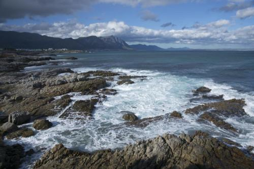 Hermanus coastline whale tours