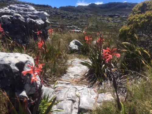 Hidden locations Table Mountain