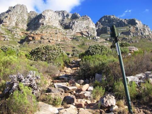 Hike Table Mountain Kirstenbosch Gardens